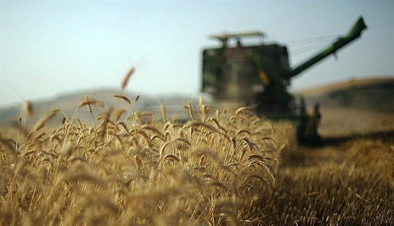 ۴۲ هزار تن گندم از کشاورزان شهرستان ری خریداری شد