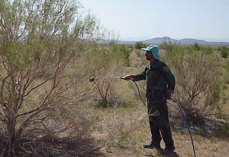 مبارزه با ملخهای مهاجم در مزارع شهرستان ری آغاز شد