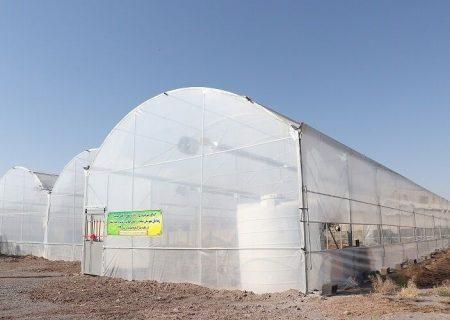 رشد ۳۵۰ درصدی احداث گلخانه در شهرستان ری