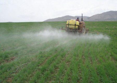 یکهزار هکتار زمین کشاورزی شهرستان ری مورد هجوم ملخها قرار گرفته است